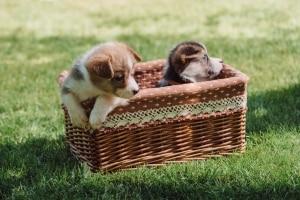 hundenamen für weibchen
