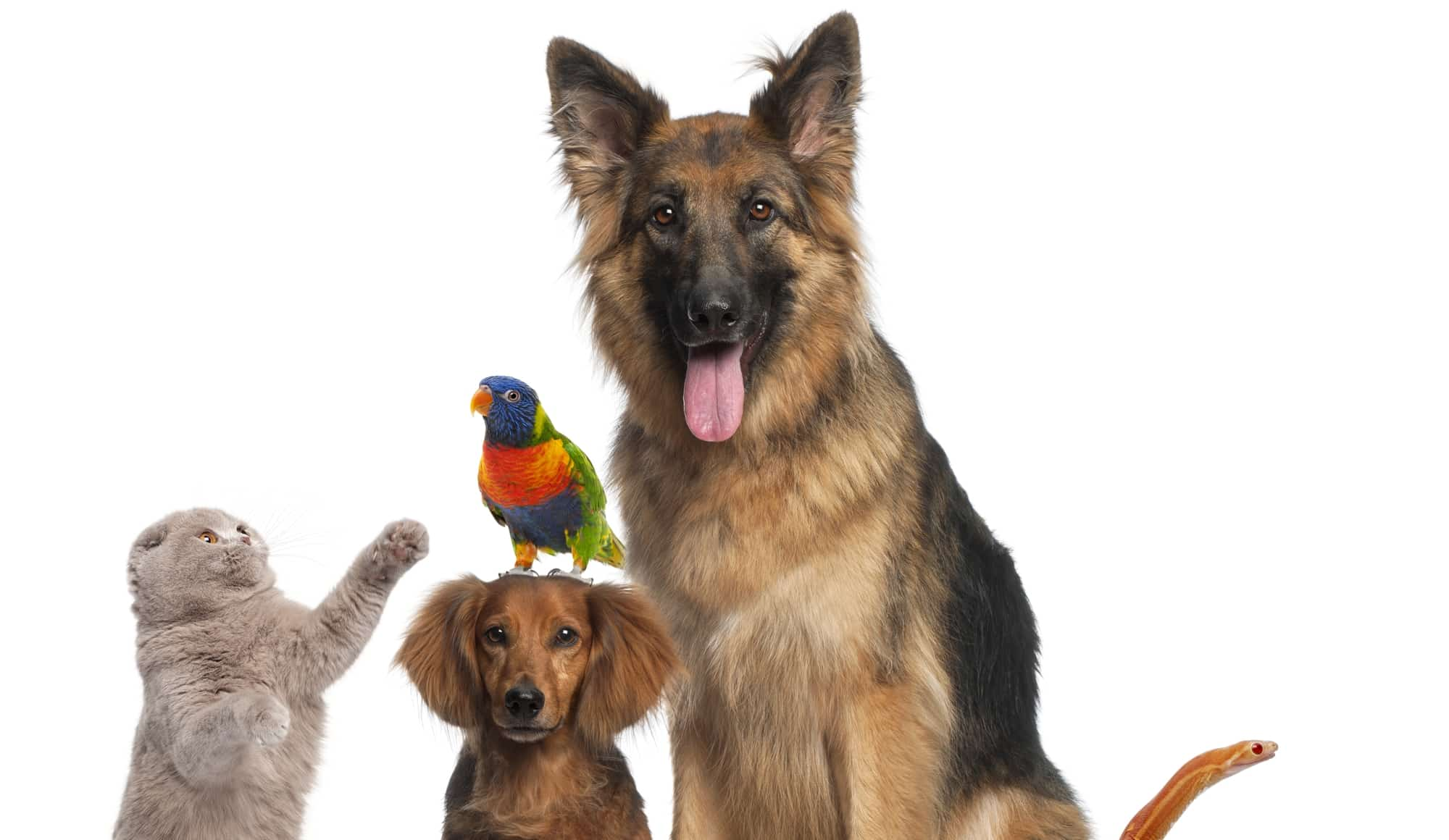 Tiernamen 110 Vorschlage 4 7 Tipps Zur Namenswahl Schreiben Net